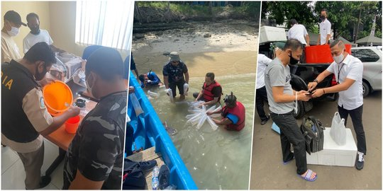 Lim Swie King Ditangkap Terkait Ekspor Benih Lobster