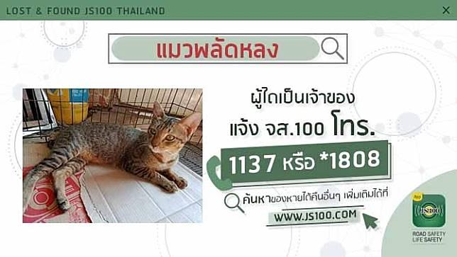 พบแมวพลัดหลงติดมากับรถปิคอัพ หลังไปเก็บขยะแถวย่านพระราม2 ผู้ใดเป็นเจ้าของแจ้ง JS100 โทร. *1808 หรือ 1137