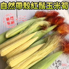 帶殼紅鬚玉米筍, 吃得到玉米鮮嫩甘甜又爽脆的滋味!火鍋、燒烤必備食材;蒸煮、拌炒都適合,大人小孩都喜歡!
