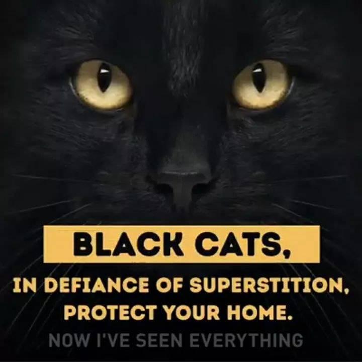 Inilah 8 Mitos Yang Dibawa Sama Kucing Berdasarkan Warna Dan Motif Bulunya Provoke Online Com Line Today