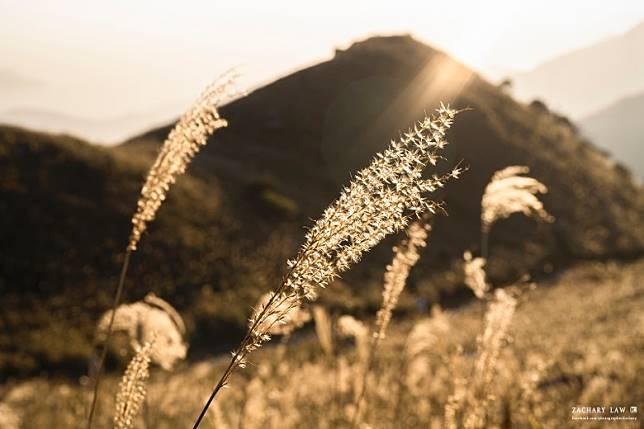 秋意濃,溫暖的陽光仍照耀著山上的植物,帶出溫暖的顏色。(Zachary Low攝)