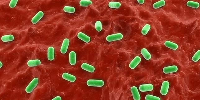 Ilustrasi bakteri probiotik(Shutterstock)  Artikel ini telah tayang di Kompas.com dengan judul