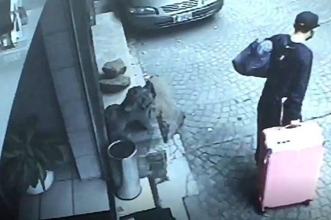 ▲港男陳同佳去年 2 月在台殺害女友,事後以行李箱搬運棄屍。(圖/翻攝自《香港01》)