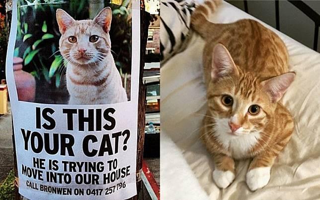 Download 76+  Gambar Kucing Yang Bisa Digambar Terlihat Keren HD