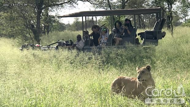 在非洲最大的克魯格國家公園,乘坐敞篷越野車獵遊非洲,馳騁大草原追尋五霸身影(圖/鴻鵠逸遊 提供)