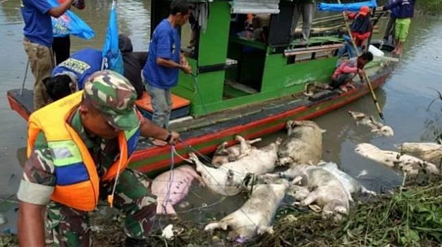 Personel Babinsa TNI dibantu petugas gabungan mengangkat bangkai babi yang mati akibat penyakit african swine fever dari aliran Sungai Bederah untuk dikubur di Kelurahan Terjun, Medan, Sumatera Utara. [Antara/Irsan Mulyadi]