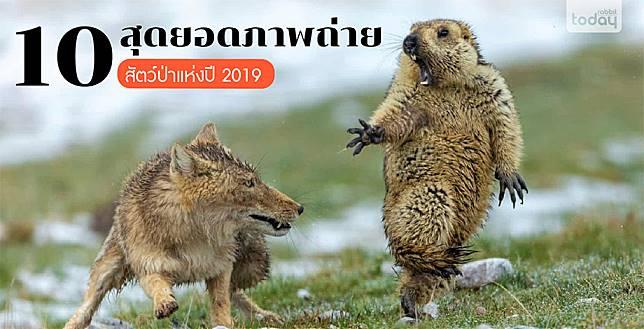 ชมภาพถ่ายสายธรรมชาติจากทั่วโลก Wildlife Photographer of the Year 2019