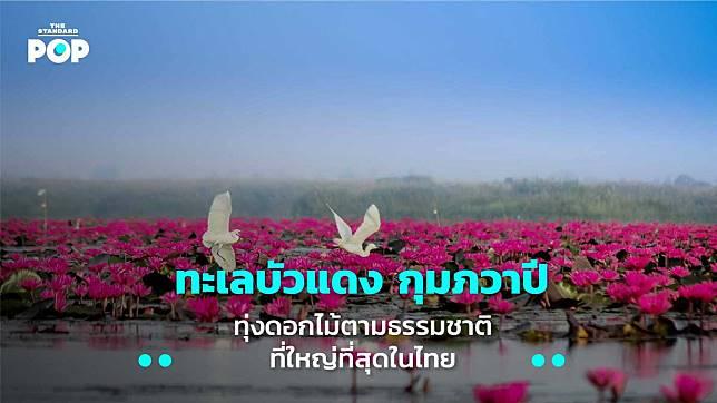 ทะเลบัวแดง กุมภวาปี ทุ่งดอกไม้ตามธรรมชาติที่ใหญ่ที่สุดในไทย