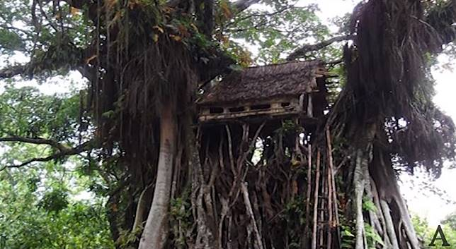 Hasil gambar untuk Tafea Treehouse