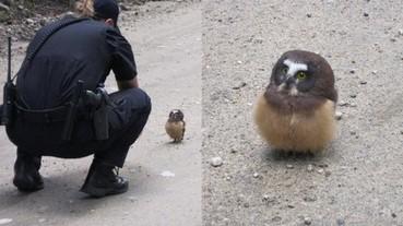 美國警察在路中央捕獲一隻貓頭鷹 網友紛紛 KUSO 空白對話!