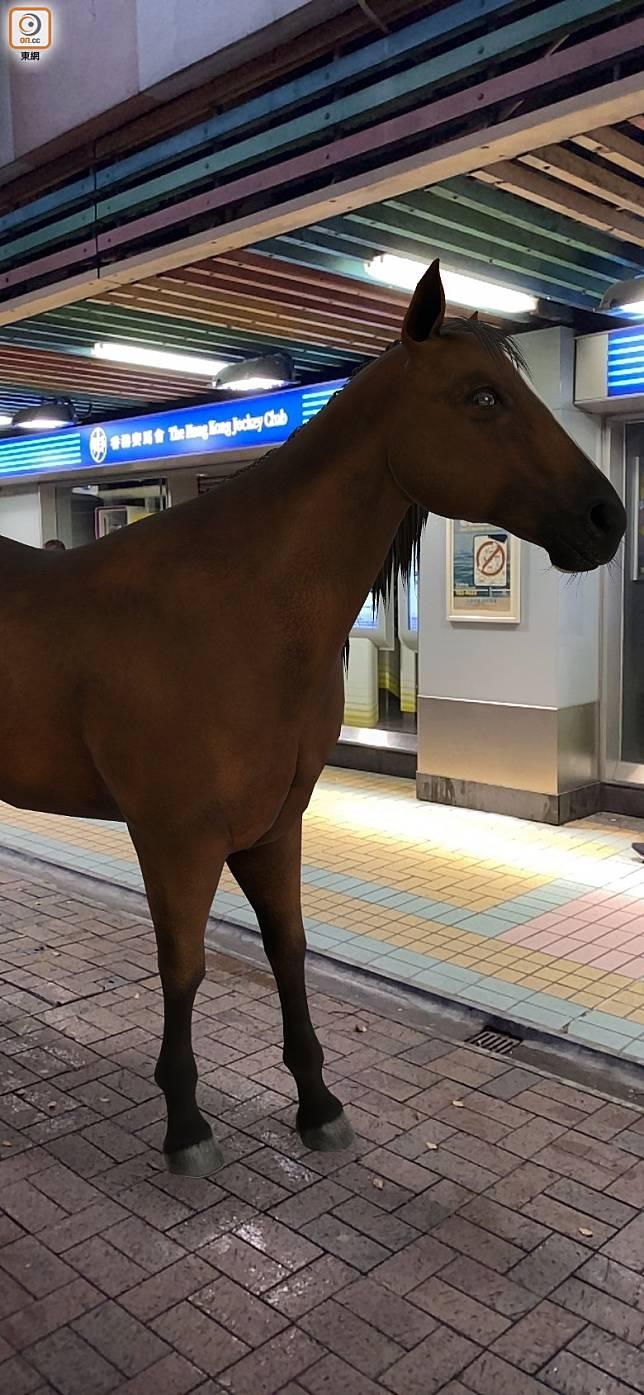 賽馬會附近有馬,好正常啫!(互聯網)