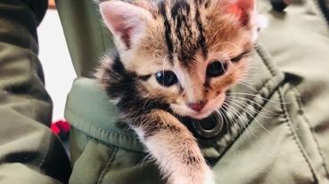 [寵物。貓咪]兩隻小屁貓