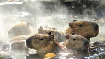 我在日本泡溫泉