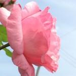 星野 桜💖シェア・エッセイ創始者