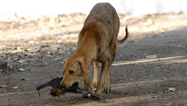 Begini Kronologis 25 Orang Dilarikan ke Puskesmas Usai Makan Daging Anjing