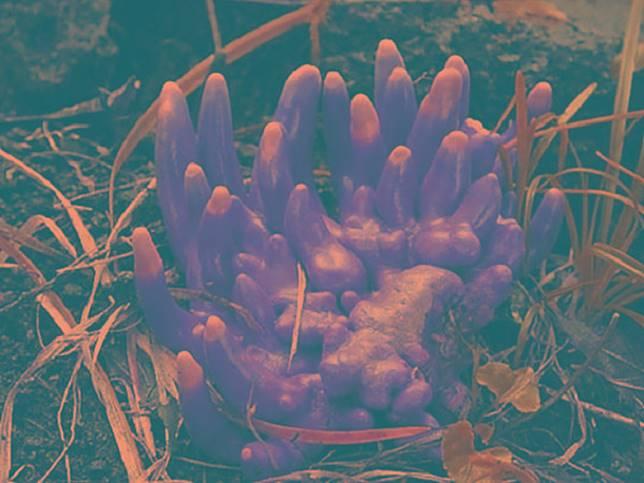 大自然都有隻紅手手,你估吓係咩植物?(互聯網)