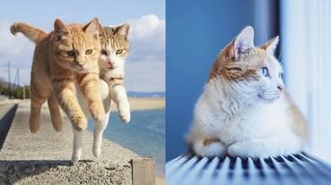 【攝影特輯】喵星人再次攻陷人類!國外 7 位貓奴攝影師 M 屬性無極限