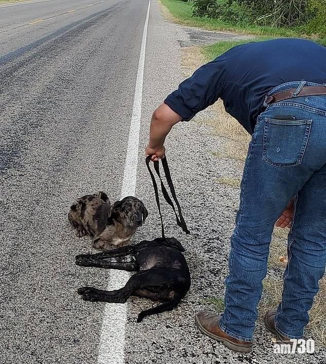 【見者心痛】姊姊被撞死  狗狗路邊護屍不肯離去