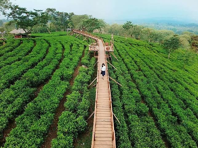 6 Wisata Kebun Teh Di Jawa Timur Ini Gak Kalah Keren Dengan