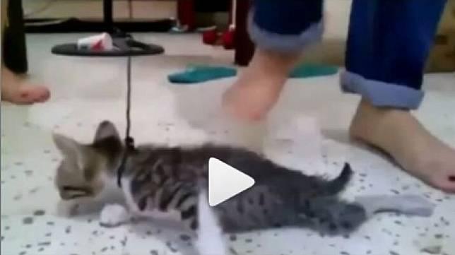 Nama Kucing Di Upin Ipin 81021 Nama Untuk Kucing Comel Lucu Dan Unik