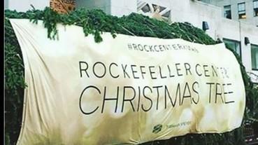 史上第二高聖誕樹正式進入洛克斐勒 月底點燈閃耀紐約!
