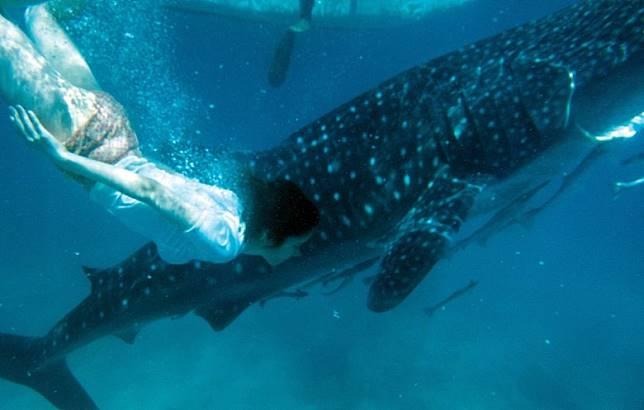 阿妹更會跟鯨鯊一起暢泳。(互聯網)