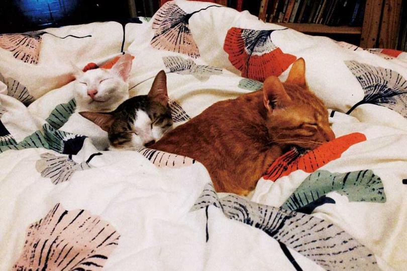 對王渝萱來說,照顧貓咪最困難的地方是公平與陪伴,她不希望特別偏袒哪一隻。(圖/王渝萱提供)