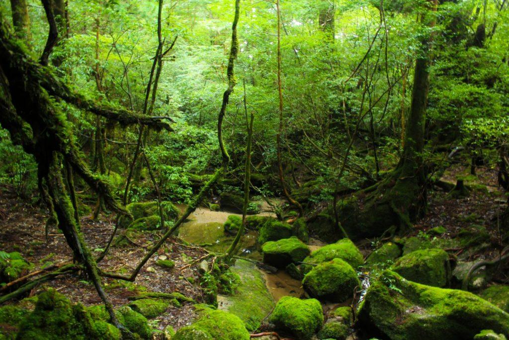 夏天就到屋久島享受神秘大自然!一窺世界遺產精選景點 2