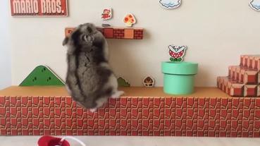 【睇片】#安倍馬里奧 爆紅?會不會是受到小倉鼠的啟發啊?