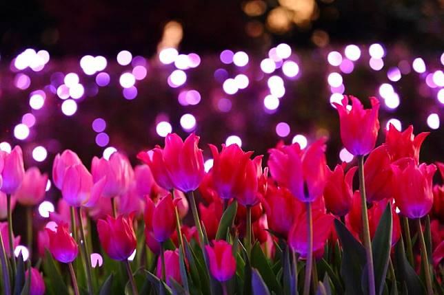 冬季燈飾也結合了場中花海,晚上賞花別具風貌。(互聯網)