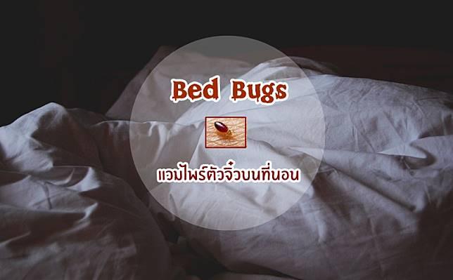 วิธีรับมือกับ Bed Bugs หรือ เรือด แวมไพร์ตัวจิ๋วบนที่นอน | ชอบกัดและดูดเลือดคน