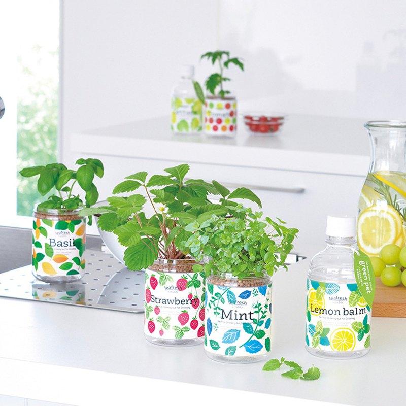 Green pet 水耕香草植物 種植瓶(內含肥料)
