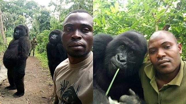 Viral! Gorila Foto Selfie Layaknya Artis Instagram dengan Gaya yang Imut Hebohkan Sosial Media