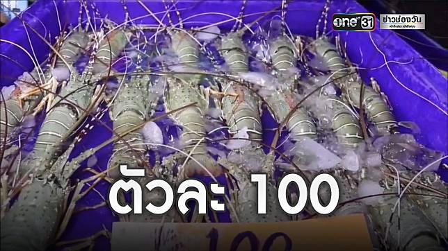 แม่ค้าพัทยาขายกุ้งมังกร ไม่ผ่านพ่อค้าคนกลาง ตัวละ 100