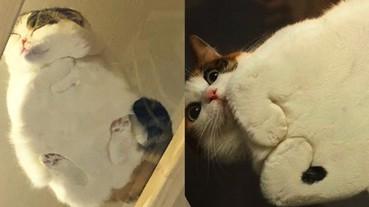 為什麼貓奴家裡都有一張「玻璃透明桌」?超萌原因讓你無法反駁