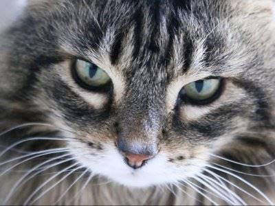Cek Ekspresi Ini, Tandai Kucing Kesayanganmu Sedang Sakit