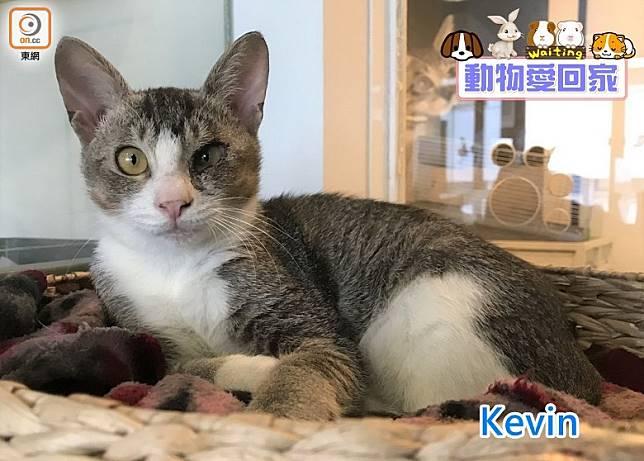 Kevin外表高冷,但其實牠是個熱情愛玩的小夥子。(愛協提供)