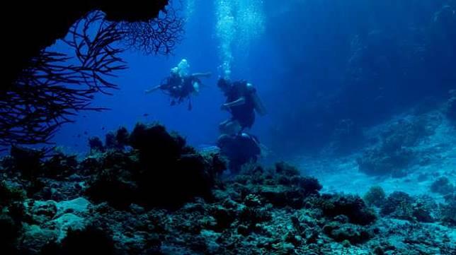 Terumbu Karang di Samudera Hinda Terancam Hilang Akibat Gelombang Panas
