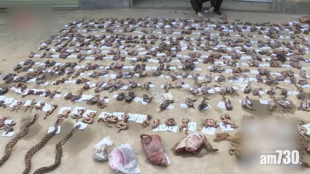 疫情期間繼續收購 江西男家藏471隻野味