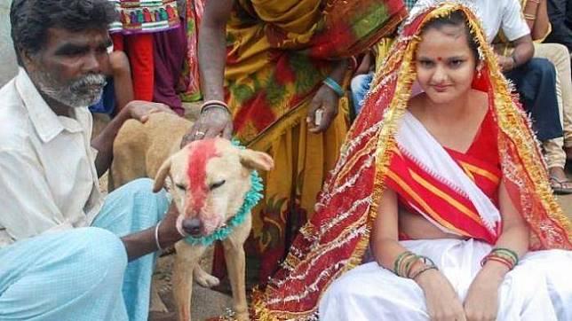 Di India, kamu boleh nikah sama binatang lho!
