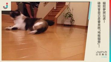 貓奴夢寐以求碌完會自己走番來既「地板貓壺」