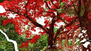 鳳凰木 |短暫的綻放,漫長的等待:番茄倉庫的 鳳凰木