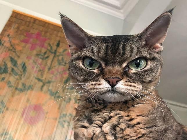 臭臉貓不信任人類甚至有攻擊性 女子:我願意等你!