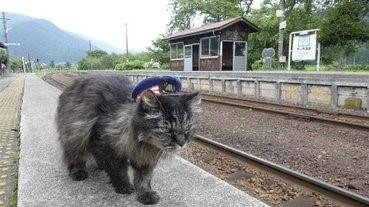 再見貓站長@蘆之牧溫泉站