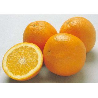 アメリカ産他 オレンジ