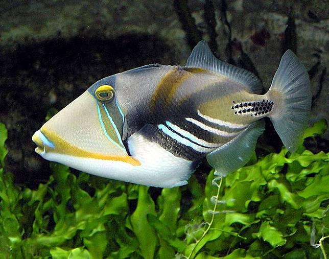 7 Jenis Jenis Ikan Laut Ekonomis Penting Di Indonesia Jarang Diketahui Merdeka Com Line Today
