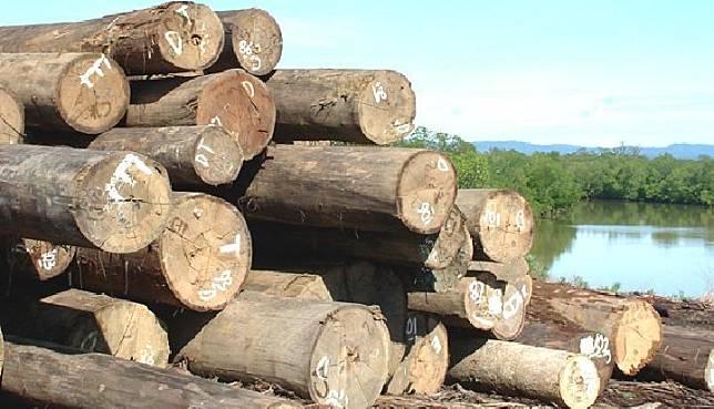 Illustration of Illegal Logging. Credit: Komunika Online