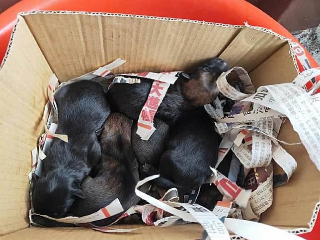 誰這麼殘忍,彰化田中6隻初生幼犬被丟棄水溝