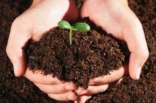 咖啡渣含植物所需的營養,是全天然及環保的肥料。(互聯網)