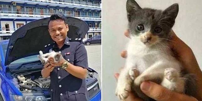 Anak kucing di dalam mobil polisi (World of Buzz)